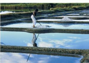 Visite de marais salants avec Eva JOSSO, paludière @ au lieu-dit Le Lany | Mesquer | Pays de la Loire | France